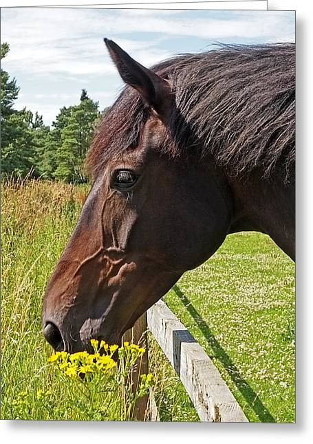 Horse Images Greeting Cards - The Grass Is Always Greener Greeting Card by Gill Billington