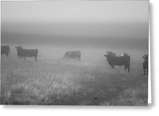 Moos Print Greeting Cards - The Graze Greeting Card by Matthew Blum