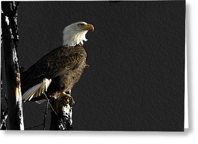 The Great Bald Eagle 1  Greeting Card by Thomas Young