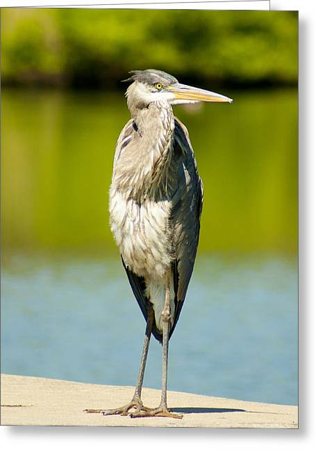 Charlotte Framed Photography Greeting Cards - The Great Blue Greeting Card by B Wayne Mullins