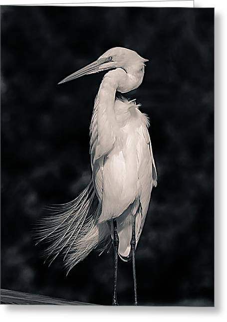 D700 Greeting Cards - The Great Egret Greeting Card by Chris Modlin