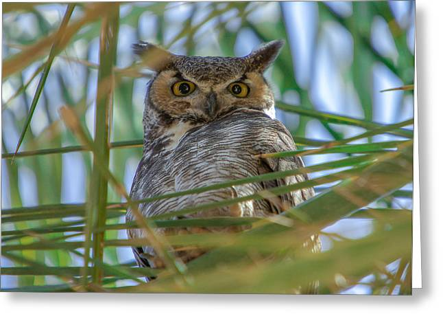The Great Horned Owl Greeting Card by Robert  Aycock
