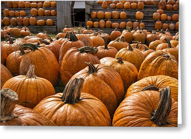 Hallows Greeting Cards - The Great Pumpkin Farm Greeting Card by Peter Chilelli