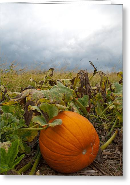 Patch Greeting Cards - The Great Pumpkin Greeting Card by Wayne King