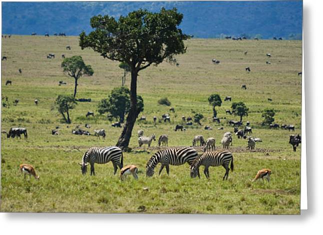 Rhinoceros Greeting Cards - The Great Savanna Plains Greeting Card by Gary Keesler