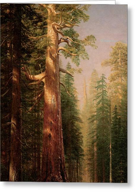 Bierstadt Greeting Cards - The Great Trees Mariposa Grove California Greeting Card by Albert Bierstadt