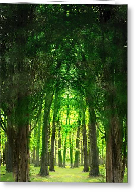 Forest Floor Greeting Cards - The Green Canopy Greeting Card by Mountain Dreams