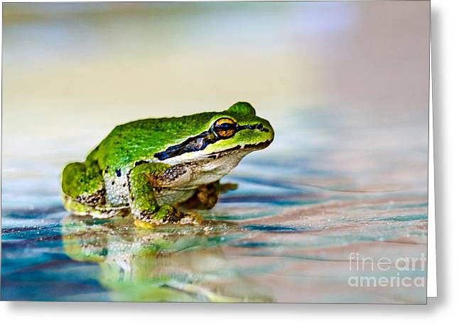 Haybale Greeting Cards - The Green Frog Greeting Card by Robert Bales