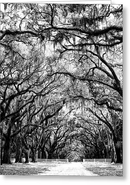 Walk Paths Greeting Cards - THE GREEN MILE BW Savannah GA Greeting Card by William Dey