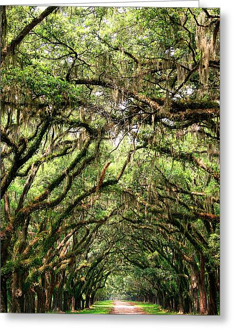 Chatham County Greeting Cards - THE GREEN MILE Savannah GA Greeting Card by William Dey
