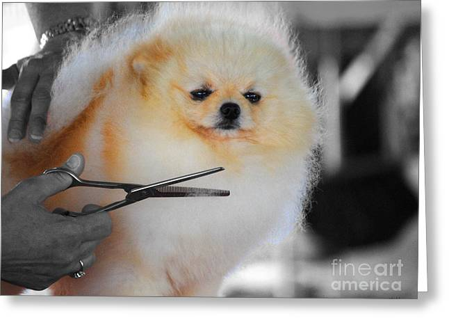 Scissors Greeting Cards - The Groomer Greeting Card by Jai Johnson