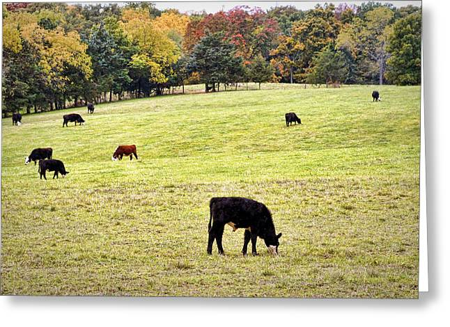 Mo Ranch Greeting Cards - The Grounds Crew Greeting Card by Cricket Hackmann