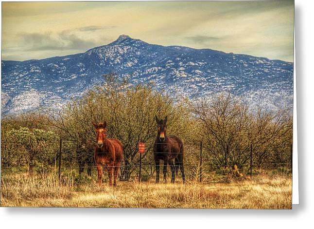 Rincon Mountains Greeting Cards - The Guardians Of Rincon Peak Greeting Card by Eduardo Palazuelos Romo