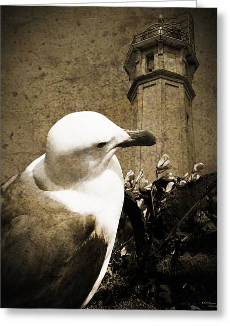 Alcatraz Lighthouse Greeting Cards - The Gull Greeting Card by Dale Simmons