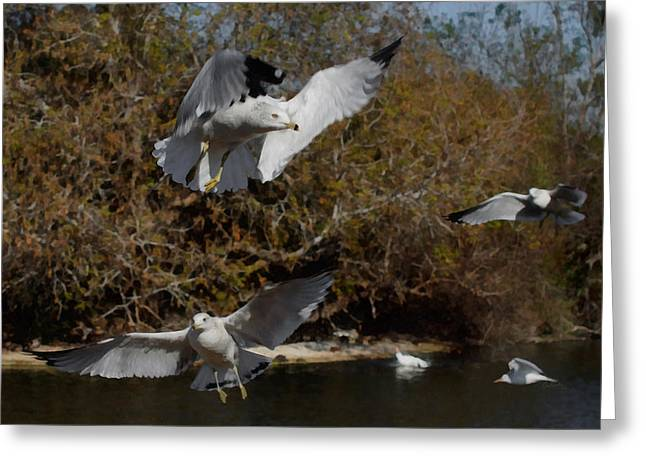 Seabirds Digital Art Greeting Cards - The Gulls Greeting Card by Ernie Echols