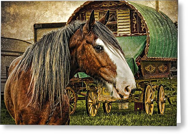 Romany Greeting Cards - The Gypsy Vanner Greeting Card by Brian Tarr