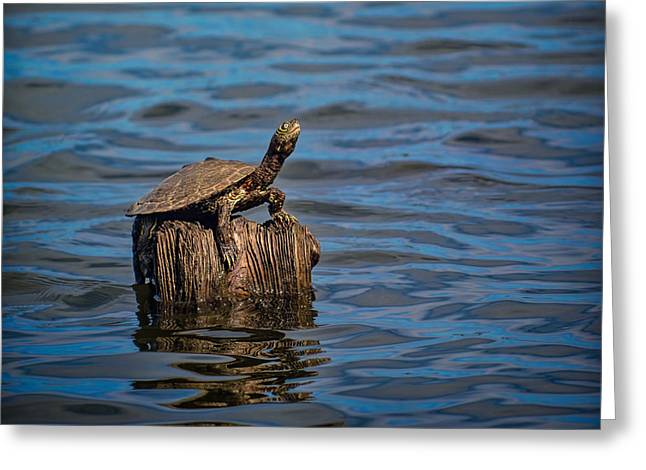 Reelfoot Lake Greeting Cards - The Happiest Turtle Greeting Card by Jai Johnson
