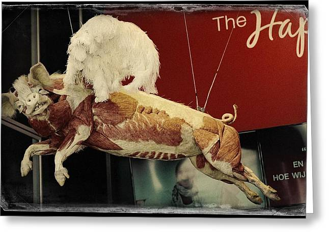 Advertisment Greeting Cards - The Happy Flying Pig. Amsterdam Greeting Card by Jenny Rainbow