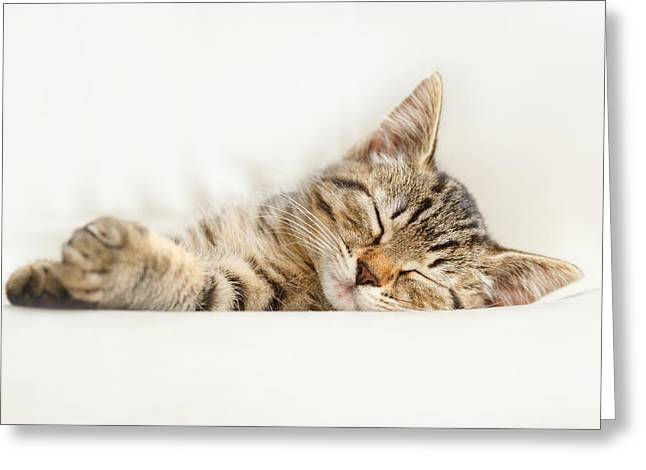Sleepy Greeting Cards - The Happy Kitten Greeting Card by Roeselien Raimond