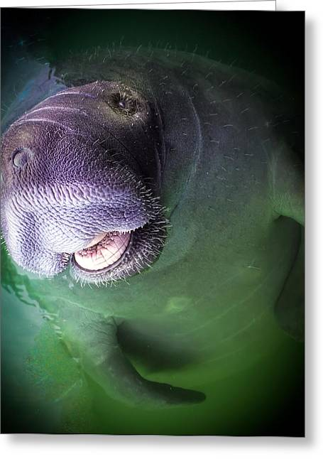 Decor For Office Greeting Cards - The Happy Manatee Greeting Card by Karen Wiles