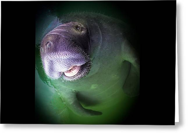 Florida Seafood Greeting Cards - The Happy Manatee Greeting Card by Karen Wiles