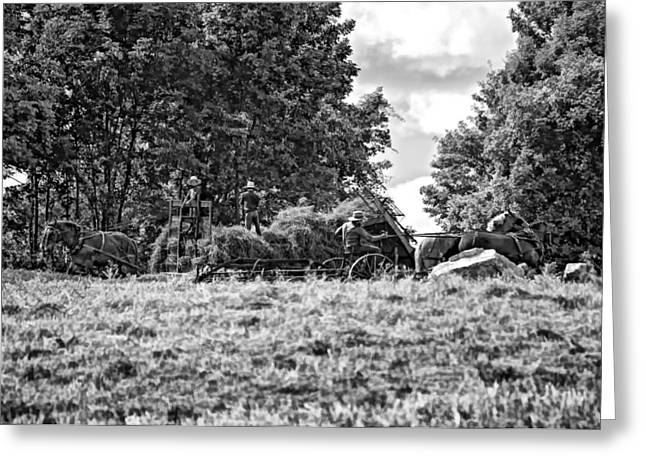 Amish Photographs Greeting Cards - The Harvest bw Greeting Card by Steve Harrington