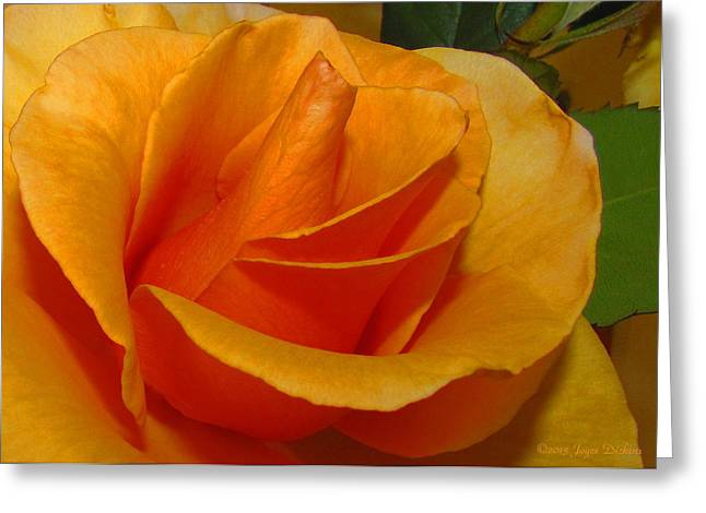 Unique Art Greeting Cards - The Heart of the Rose Greeting Card by Joyce Dickens