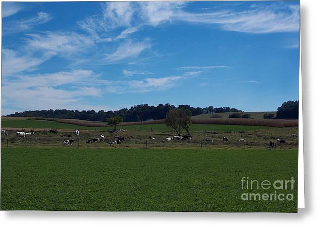 Dairy Farming Greeting Cards - The Herd Greeting Card by Skip Willits