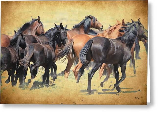 Horse In Water Paint Greeting Cards - The Herd Greeting Card by Steve McKinzie