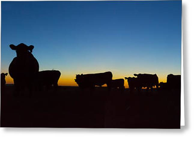 Cattle Farming Greeting Cards - The Herd Greeting Card by Thomas Zimmerman