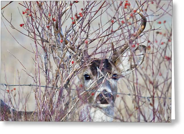 The Hidden Buck Greeting Card by John Harwood