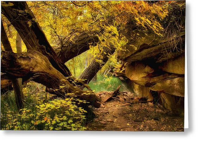 Oak Creek Greeting Cards - The Hidden Path  Greeting Card by Saija  Lehtonen