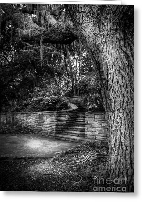 Stone Steps Greeting Cards - The Hidden Steps 1 Greeting Card by Marvin Spates