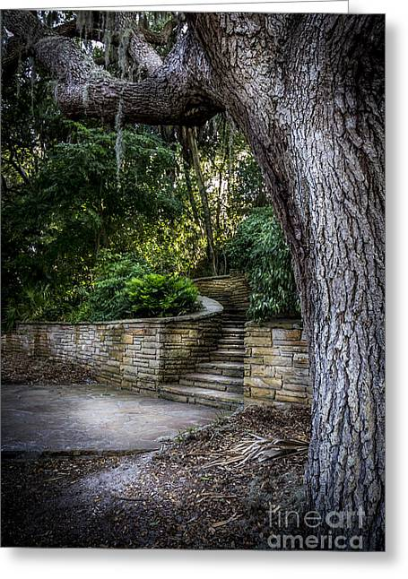 Small Trees Greeting Cards - The Hidden Steps 2 Greeting Card by Marvin Spates