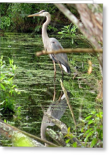 Great Blue Heron Greeting Cards - The Hiding Place Greeting Card by Kim Bemis