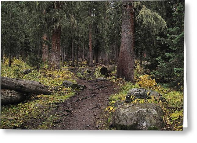 The High Forest Greeting Card by Eric Glaser