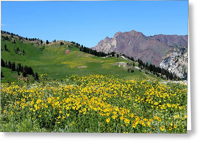Little Cottonwood Canyon Greeting Cards - The Hills are Alive Greeting Card by Marty Fancy