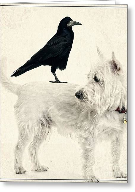 Westie Greeting Cards - The Hitchhiker Greeting Card by Edward Fielding