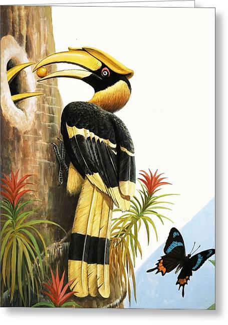 Hornbill Greeting Cards - The Hornbill Greeting Card by R.B. Davis
