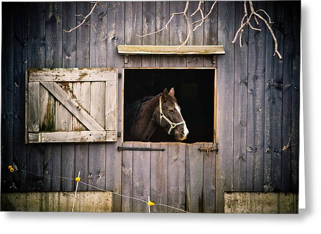 Mo Ranch Greeting Cards - The Horse Greeting Card by Kristy Creighton