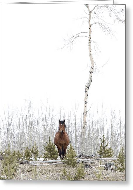 Lone Horse Greeting Cards - The Horse watcher Greeting Card by Linda Finstad