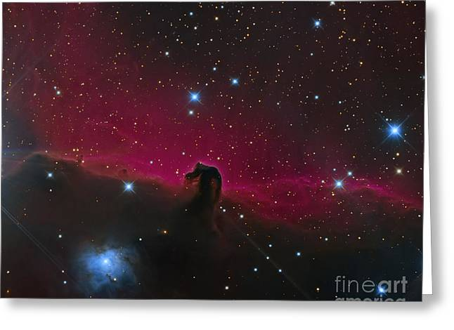 Twinkle Greeting Cards - The Horsehead Nebula Greeting Card by Michael Miller