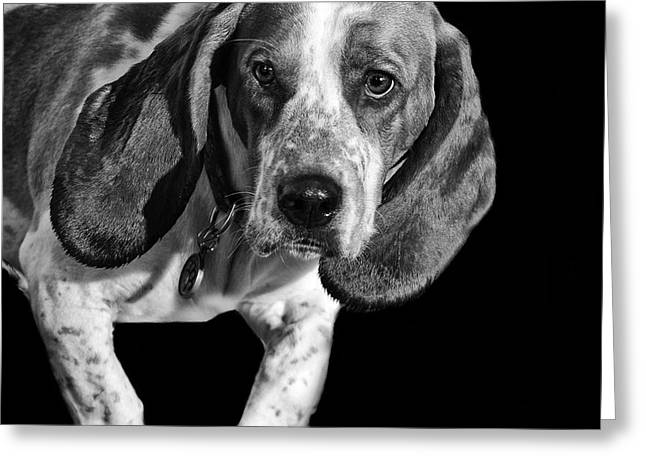 Doggies Greeting Cards - The Hound Greeting Card by Camille Lopez