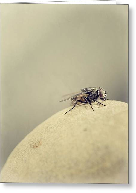 Filth Greeting Cards - The Housefly III Greeting Card by Marco Oliveira