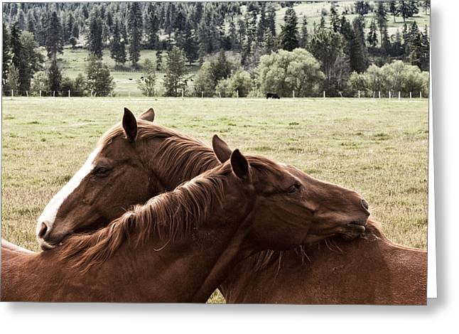 Quarter Horse Greeting Cards - The Hug Greeting Card by Monte Arnold