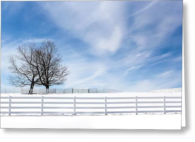 The Hugging Trees Greeting Card by Nancy Greindl