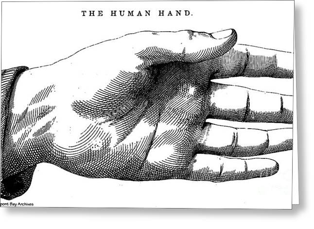 Palm Reader Hand Greeting Cards - The Human Hand 1885 Illustration Greeting Card by Pierpont Bay Archives