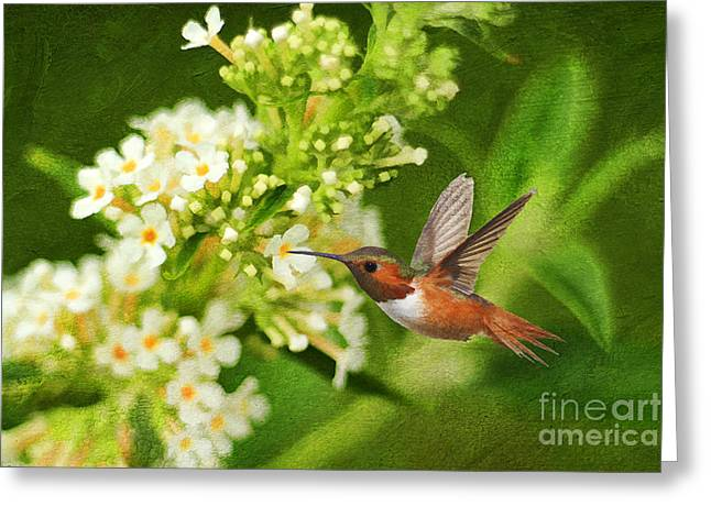 Butterfly In Motion Greeting Cards - The Hummer and the Butterfly Bush Greeting Card by Darren Fisher
