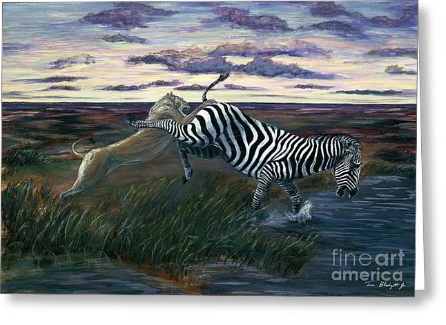 Zebra Picture Prints Greeting Cards - The Hunt Greeting Card by Tom Blodgett Jr