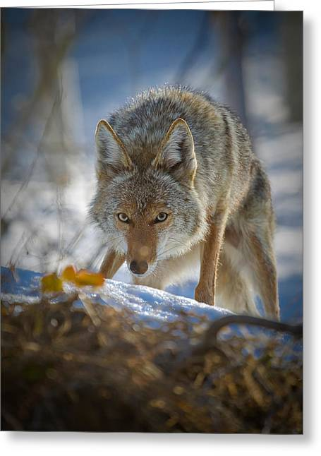 Little Cottonwood Canyon Greeting Cards - The Hunter Greeting Card by Rob Daugherty